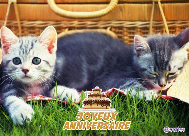 Carte anniversaire chats pique-nique