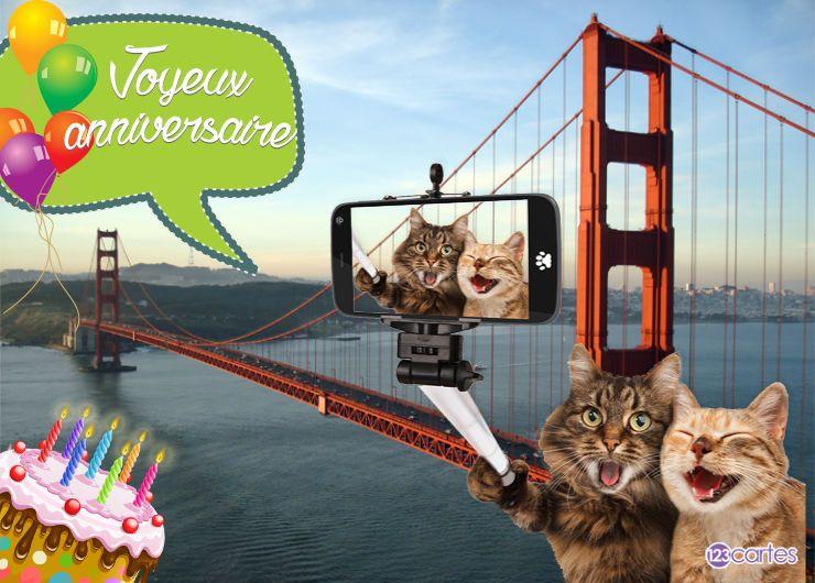 deux chats qui se prennent en selfie