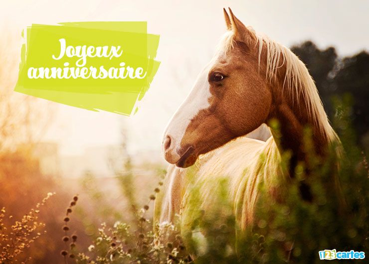 Top cheval - Cartes et invitations gratuites - 123 cartes WD24