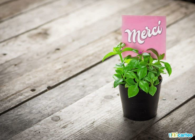 carte merci plante ornementale