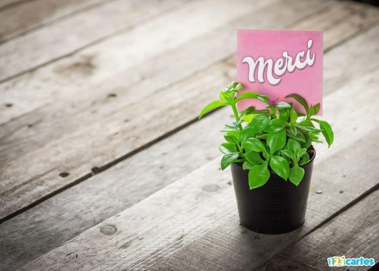 carte merci plante ornementale