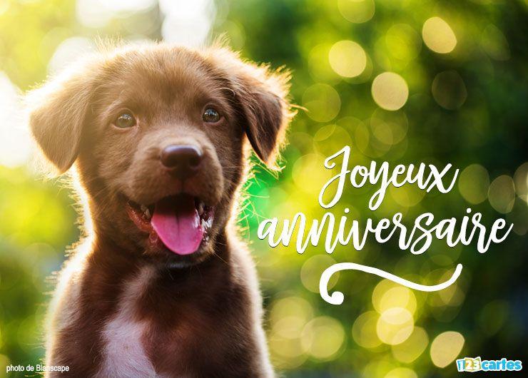 carte anniversaire Labrador retriever couleur chocolat