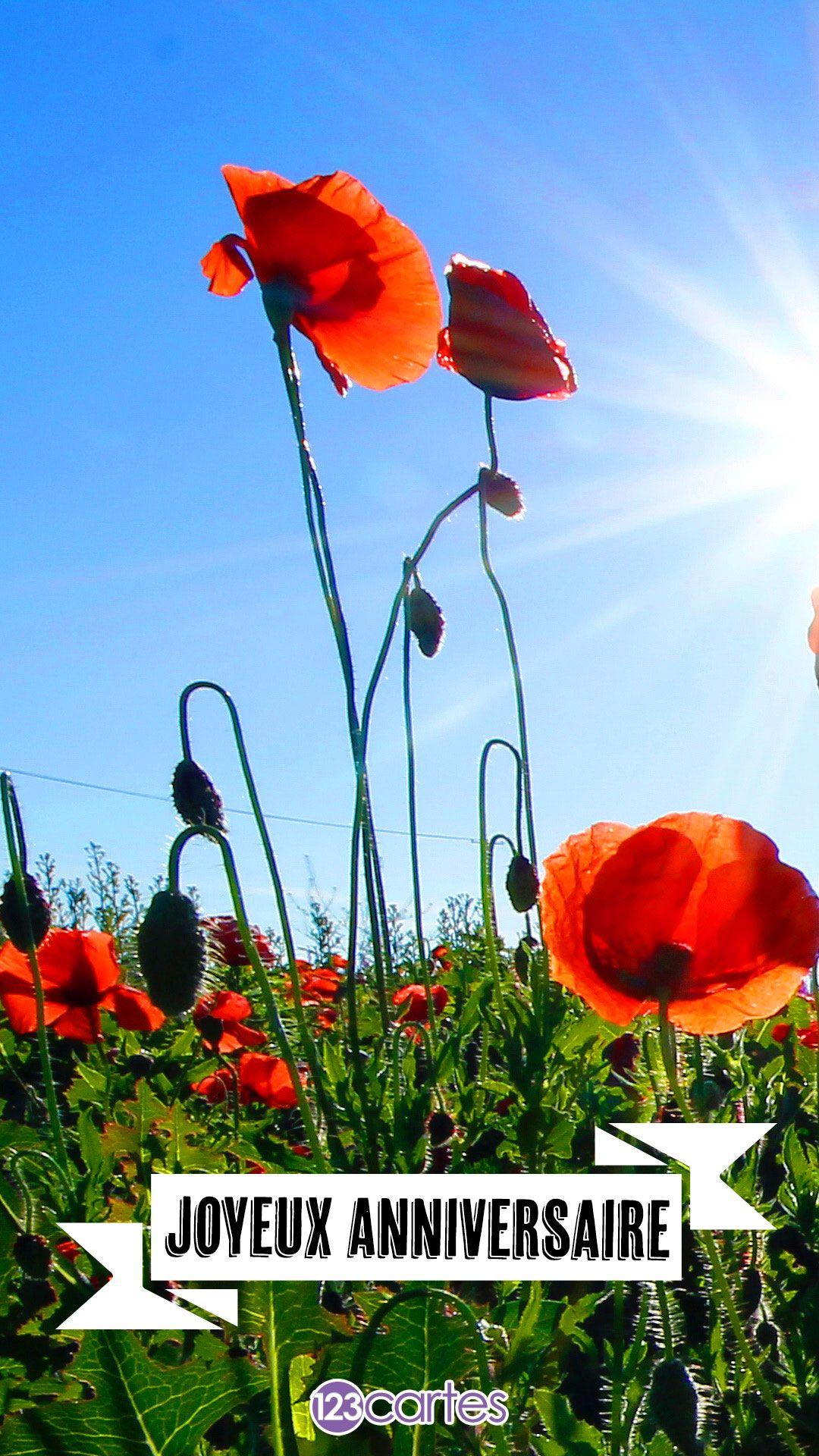 champ de coquelicots rouges, soleil