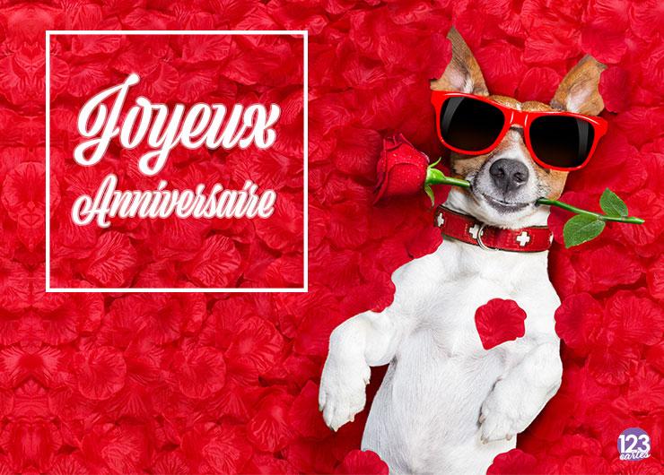 chien Jack Russell couché sur des pétales de roses avec une rose rouge